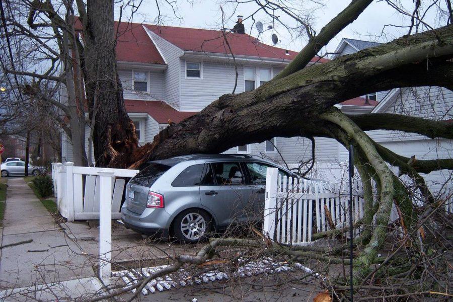 a broken tree that has fallen on top of a silver suv
